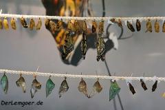 Im Schmetterlinghaus im Maxipark
