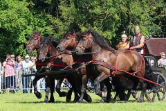PferdeStark2015-02