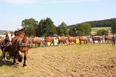 PferdeStark2015-09
