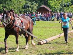PferdeStark2015-05
