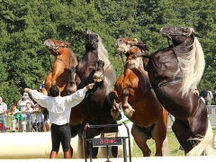 PferdeStark2015-06