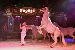 Circus-Probst-Pferde