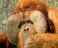 Buschi-Zoo-OS-A-Leber