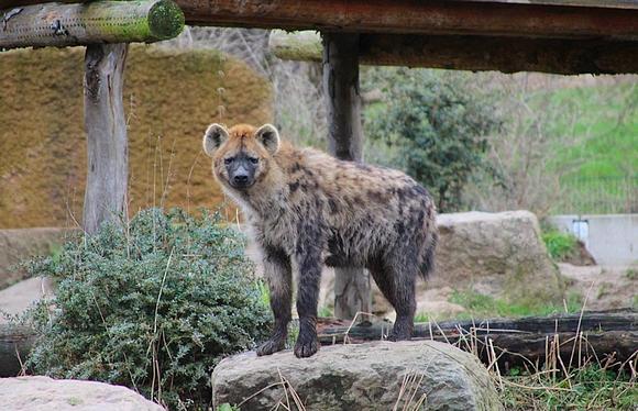 osnabrücker zoo öffnungszeiten