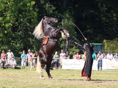 PferdeStark2015-03